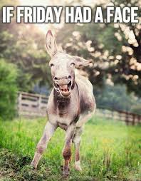 Funny Donkey Memes - elephantjournal com best animals are people too pinterest