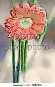 a sketch of orange red gerbera daisy flower stock photo royalty