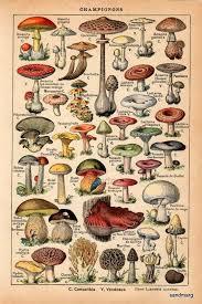 best 25 mushroom art ideas on pinterest doodle doodle