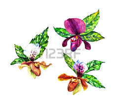 Boutonniere Flower 548 Boutonniere Flower Stock Vector Illustration And Royalty Free