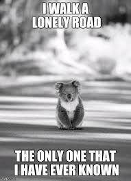 Koala Meme Generator - image only road i ve ever known jpg rwby wiki fandom powered