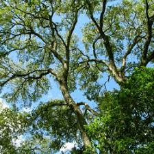 beautiful trees 41 reviews tree services 2605