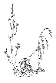 coloriage d u0027une composition florale asiatique tête à modeler