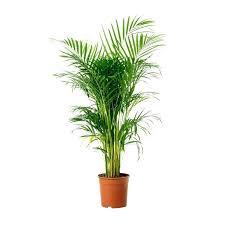 live indoor plants buy houseplants online palm indoor plants online buy in buy live