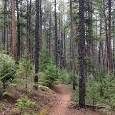 Colorado forest images Colorado trail picture of pike national forest fairplay jpg