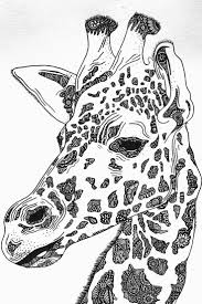 best 25 giraffe drawing ideas on pinterest giraffe art nursery