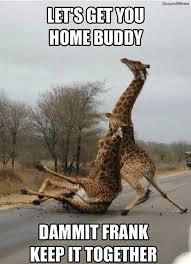 Funny Saturday Memes - saturday memes funny 6 king tumblr