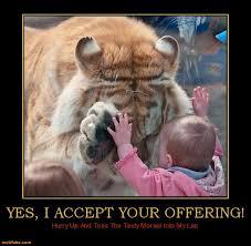 Funny Memes Pinterest - funny animal memes pinterest