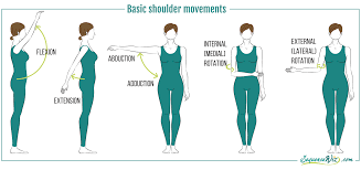 Anatomy Of The Shoulder Girdle One Simple Move To Loosen Up Your Shoulders Sequence Wiz