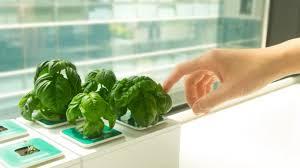 grow edible greens fast u0026 effortlessly w this simple kit by