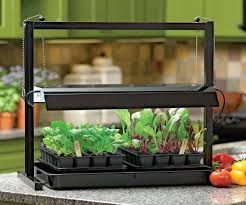 vegetable gardening can be moved indoors for winter harvest home