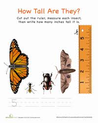 incredible insects 7 bugged out worksheets education com