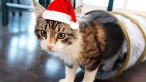 cat christmas cat christmas
