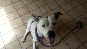 morro bay have dog blog will travel