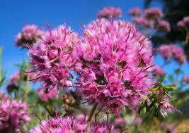 november flowers and wildlife gardening in western australia