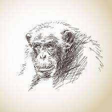 sketch of chimpanzee stock vector image 41256156