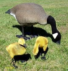 canada goose lawn ornaments lawn xcyyxh