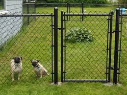 Backyard Landscaping Ideas For Dogs by Best 25 Black Chain Link Fence Ideas On Pinterest Fence Ideas