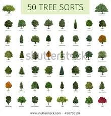 fifty different tree sorts names illustrations stock illustration