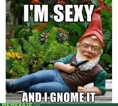 Gnome Meme - 164 best gnome memes funny gnomes images on pinterest funny