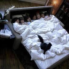 Sleeper Sofa San Diego by American Leather Comfort Sleepers At Miramar Rd San Diego King