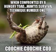 Mantis Meme - praying mantis technique memes imgflip