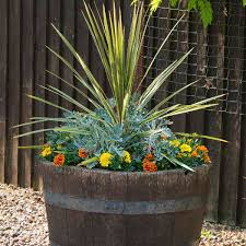 annual combination planter whiskey barrel planter my garden insider