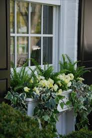 the 25 best window box flowers ideas on pinterest flower boxes