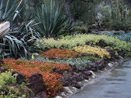 Rock Garden Cground Succulent Ground Cover In Colors Huntington Library Desert Garden