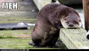 Cumberbatch Otter Meme - i can has cheezburger otters funny animals online cheezburger