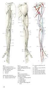 607 best anatomy images on pinterest anatomy reference drawing