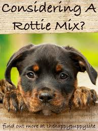 4 types of belgian sheepdogs german shepherd rottweiler mix breed facts information