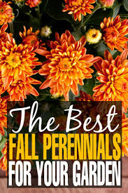 17 best images about autumn gardening on pinterest trees and