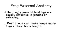 prentice anatomy the frog lab answers 100 images laboratory