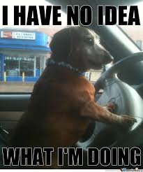 Dog Driving Meme - my dog by crownofflies meme center