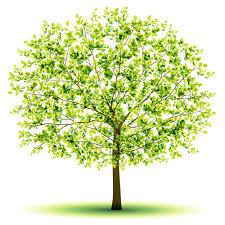 creative green tree design vector graphics 03 welovesolo