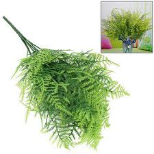 compare prices on asparagus fern plants online shopping buy low