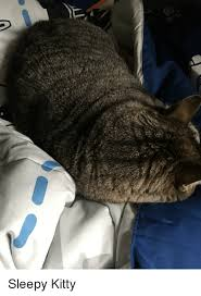 Sleepy Kitty Meme - kitty and kitty meme on sizzle
