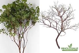 manzanita branches for sale manzanita branches freshly cut manzanita branches freshly cut