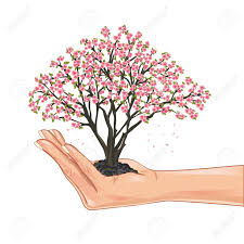 Japanese Cherry Blossom Tree by Hand Holding A Sakura Blossom Japanese Cherry Tree Isolated