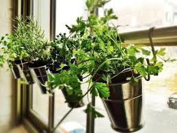 inside herb garden 25 ways to start an indoor herb garden brit co home outdoor