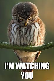 I M Watching You Meme - i m watching you stalker owl quickmeme