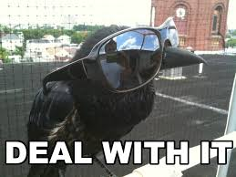 Crow Meme - image deal with it crow jpg runescape roleplay wiki fandom