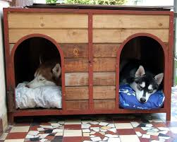 dog run ideas how to build a backyard dog run guide install