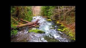 Elwha Dam Rv Park Reviews by Dungeness Forks Campground In Olympic National Forest Near Sequim