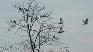 flock of frightened birds flying away from bare treetop pigeons