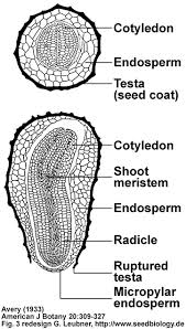 the seed biology place seed structure and anatomy