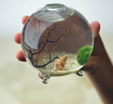 Japanese Aquascape by Marimo Miniature Aquascape Aquatic Terrarium By Pink Serissa
