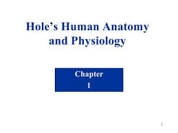 Anatomy And Physiology Chapter 1 Review Answers Powerpoint Lecture Outlines To Accompany Hole U0027s Human Anatomy And