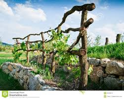 wooden grapevine trellis stock photography image 20260672
